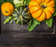 Colorful pumpkin with stem and leaves on dark wooden background Royalty Free Stock Photo