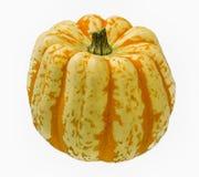 Colorful Pumpkin on White Background. Studio Shot Stock Image