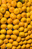 Colorful pumpkins Stock Images
