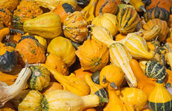 Colorful pumpkins Royalty Free Stock Photos