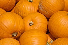 Colorful pumpkins Royalty Free Stock Image