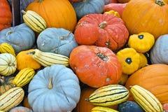 colorful pumpkins Стоковые Изображения RF