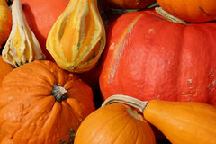 Colorful pumpkins Stock Photos