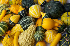 Colorful pumpkins Stock Photo