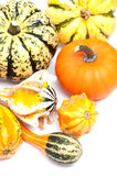 Colorful pumpkins. On a white background stock photography
