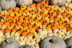 Colorful Pumpkins Stock Photos