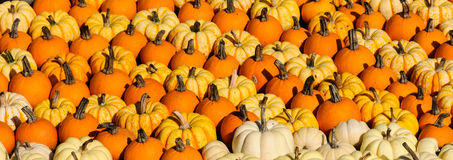 Free Colorful Pumpkins Stock Photography - 26730402