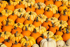 Colorful Pumpkins Stock Image