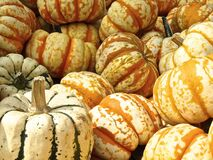 Colorful pumpkins Royalty Free Stock Images