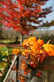 Colorful Pumpkins And Gourds Stock Images
