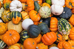 Colorful pumpkins assortment on the autumn season Stock Image