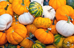 Colorful pumpkins assortment on the autumn season Stock Photos