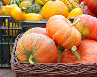 Colorful pumpkins assortment on the autumn season Stock Photo