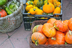 Colorful pumpkins assortment on the autumn season Stock Images