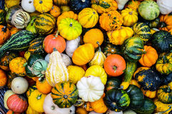 Colorful pumpkins background Royalty Free Stock Photos