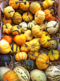 Colorful Pumpkins. A basket full with yellow, orange, green and beige pumpkins Stock Photography
