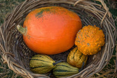 Colorful pumpkins in basket Stock Photos
