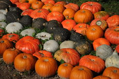 Colorful Pumpkins. Beautiful collection of various sorts of pumpkins lined up in the grass and on the earth Royalty Free Stock Photography