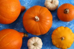 Colorful pumpkins on a blue background. stock image