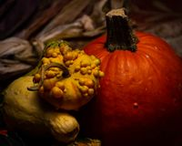 Colorful pumpkins, bumpy gourds, beautiful squash, and flint corn lie on a Thanksgiving table during autumn. Colorful pumpkins, bumpy gourds, beautiful squash royalty free stock photo