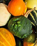 Colorful pumpkins closeup Stock Image