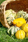 Colorful pumpkins collection Royalty Free Stock Photography