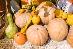 Colorful pumpkins collection Royalty Free Stock Photos