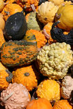 Colorful pumpkins collection Royalty Free Stock Photo