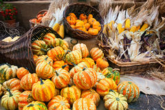 Colorful pumpkins collection on the autumn market Stock Photo