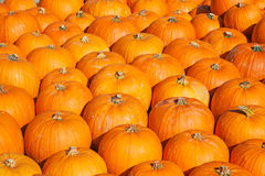 Colorful pumpkins Stock Images