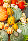 Colorful pumpkins Royalty Free Stock Photography