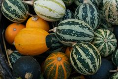 Colorful pumpkins collection on the autumn market Royalty Free Stock Photo
