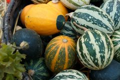 Colorful pumpkins collection on the autumn market Stock Photos