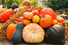 Colorful pumpkins collection on the autumn market Royalty Free Stock Image
