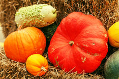 Colorful pumpkins collection on the autumn market Royalty Free Stock Images