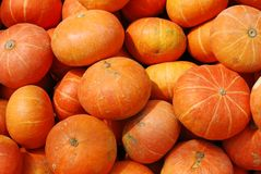 Colorful pumpkins collection backgroud Royalty Free Stock Photos