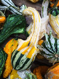 Colorful pumpkins collection on the farmers Market Royalty Free Stock Image