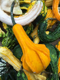 Colorful pumpkins collection on the farmers Market Royalty Free Stock Photography