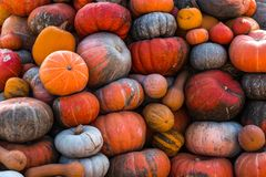 Colorful pumpkins collection on outdoor autumn market stock photos