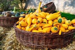 Colorful pumpkins. Halloween orange pumpkins Royalty Free Stock Image