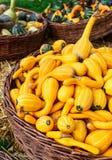 Colorful pumpkins. Halloween orange pumpkins Stock Photo