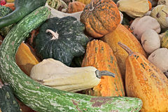 Colorful pumpkins on display in vegetable market Stock Images