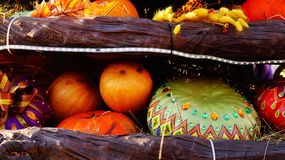 Colorful pumpkins on the fair Royalty Free Stock Photography