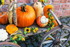 Colorful pumpkins at a farm Royalty Free Stock Photography
