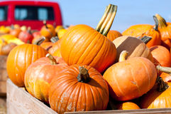 Colorful pumpkins at the farmer market Royalty Free Stock Image