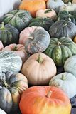 Colorful Pumpkins from the Field Stock Images