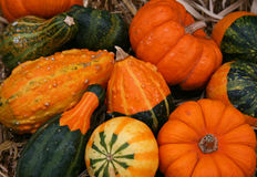 Colorful Pumpkins and Gourds Royalty Free Stock Photo