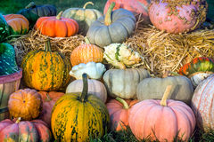 Colorful Pumpkins and Gourds Stock Photo