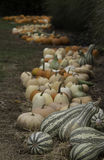 Colorful pumpkins and gourds Royalty Free Stock Images
