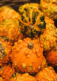 Colorful pumpkins. Halloween pumpkins Stock Photo